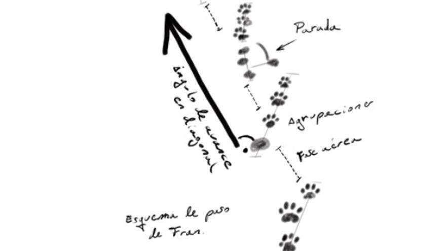 Esquema del rastreo de huellas de Fran. José María Galán