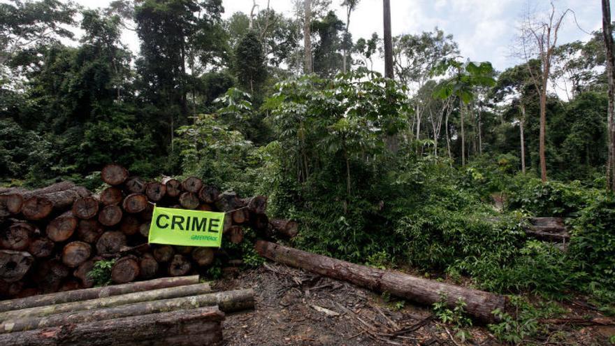 El 30% de la madera comercializada procede de talas ilegales y Galicia es una de sus principales puertas de entrada a la UE