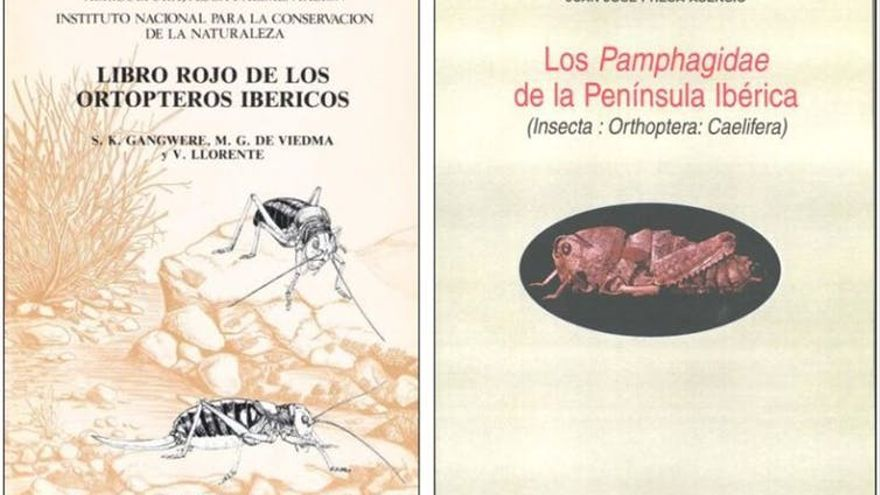 Some covers of Vicenta Llorente del Moral's books.