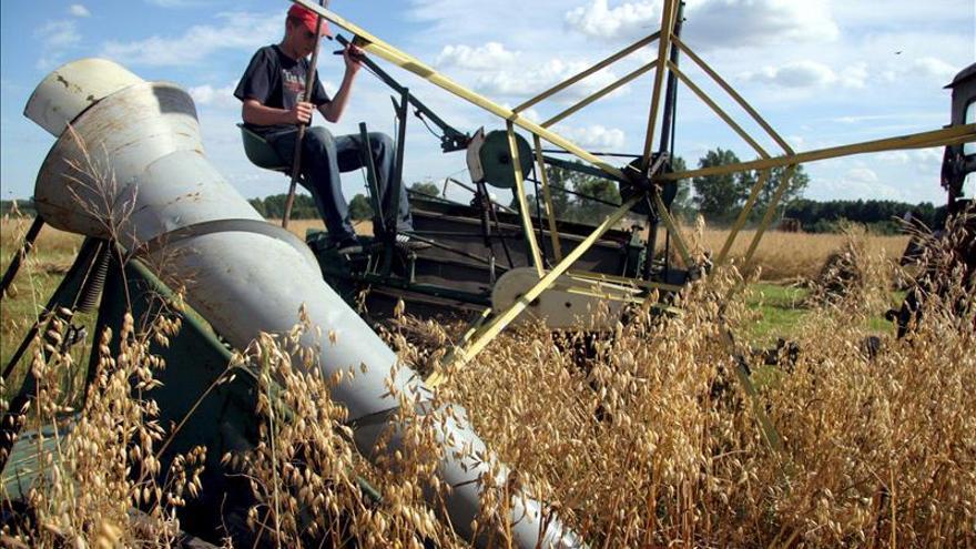 Panamá negocia contrato con una multinacional de EE.UU. para reexportar arroz