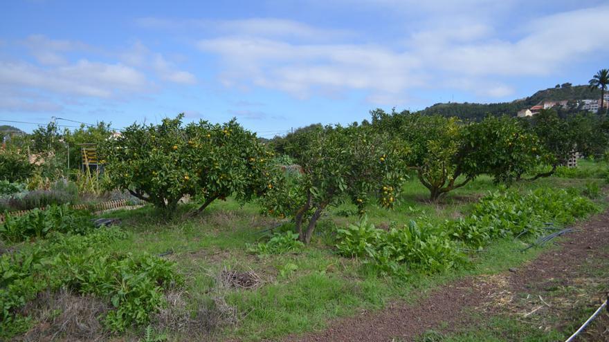 Naranjos en Huertos El Farmero