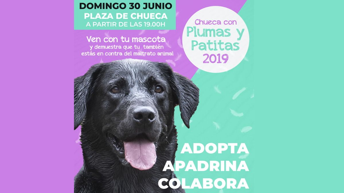 Cartel de Chueca con Plumas y Patitas 2019 | AEGAL