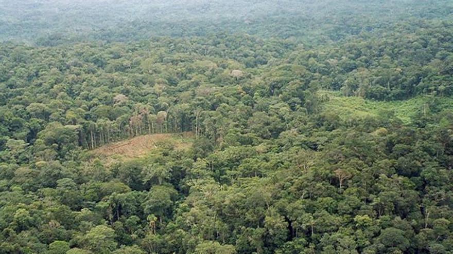 Perú redujo cultivos coca a 40.300 hectáreas en 2015, un 6,1 % menos que 2014