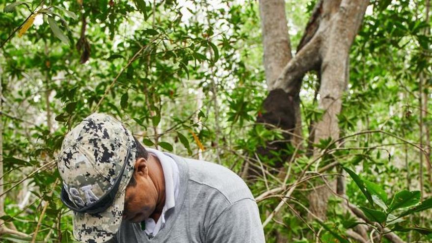 Apple y comunidades se asocian para proteger manglares del Caribe colombiano