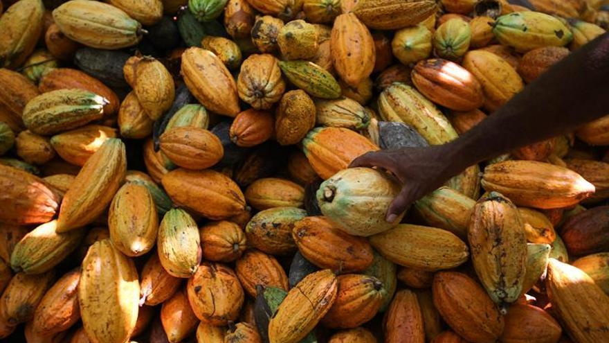Las plantaciones ilegales de cacao en Costa de Marfil han causado la deforestación de amplias zonas del parque natural de Marahoué