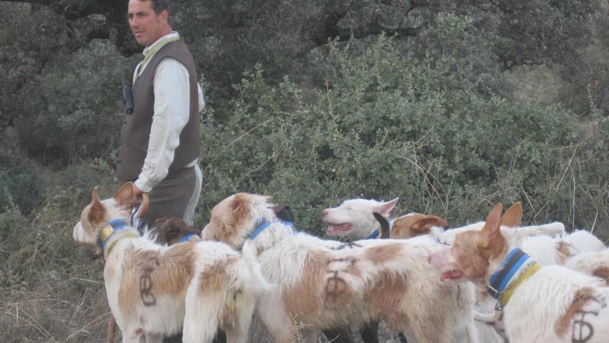 La Junta incoa el procedimiento para la declaración como BIC de la montería y la rehala en Andalucía