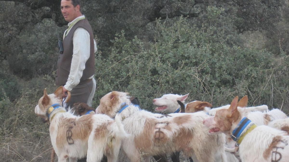 Extremadura inicia el expediente para que las rehalas y monterías sean BIC