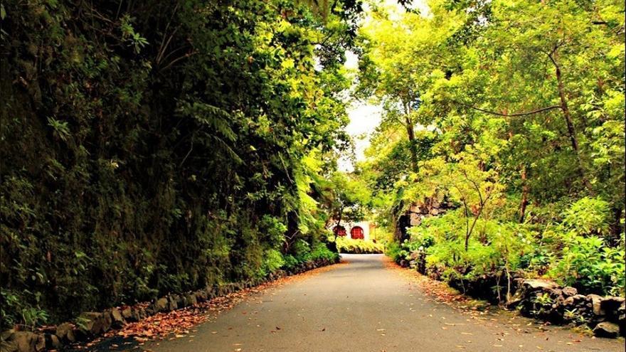 En la imagen, Bosque de Los Tilos, con el centro de visitantes e interpretación al fondo. Foto: palmerosenelmundo.com