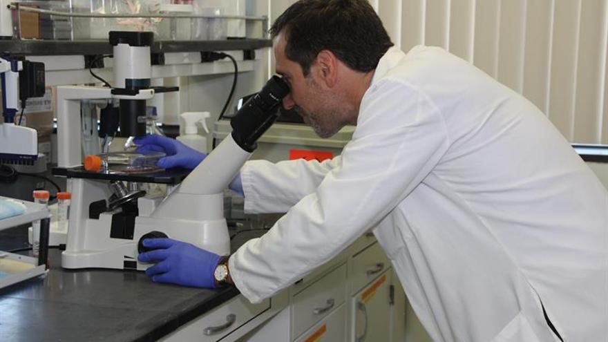 Descubren cómo la rigidez de los tejidos activa el cáncer