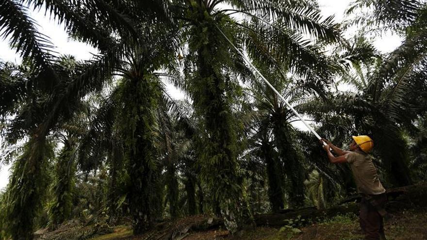 El Congreso pide mejorar el etiquetado de los productos con aceite de palma