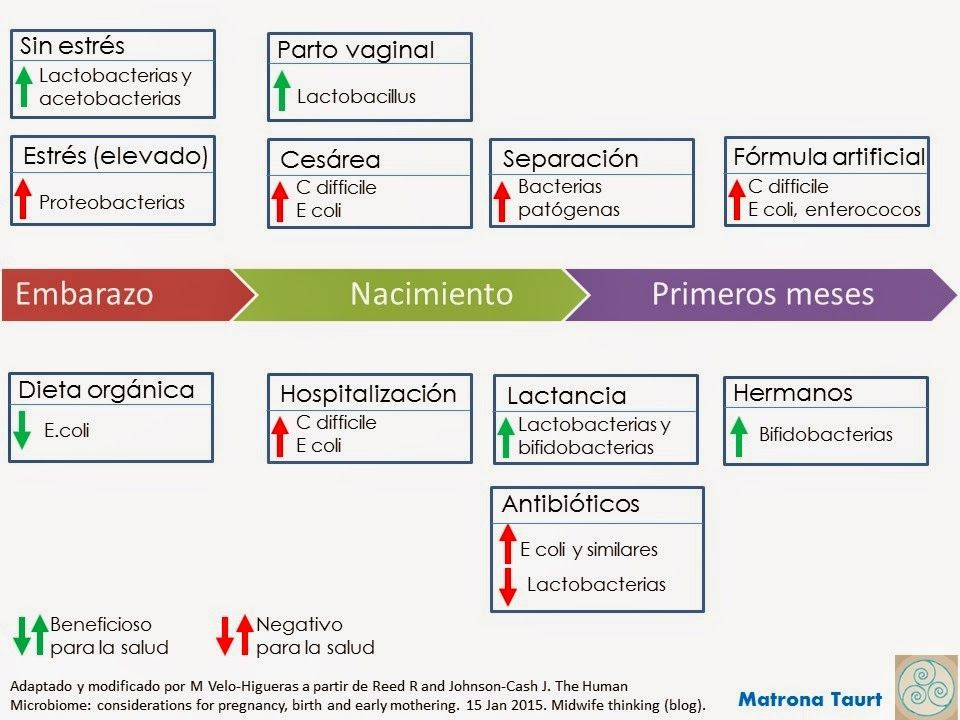 microbiota-modificacion