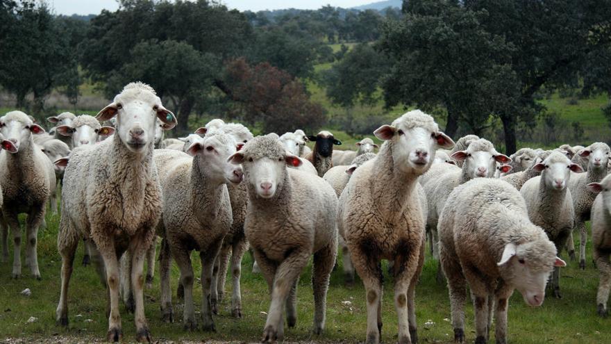 Los pastores y la gente de campo mantienen su actividad en estos días