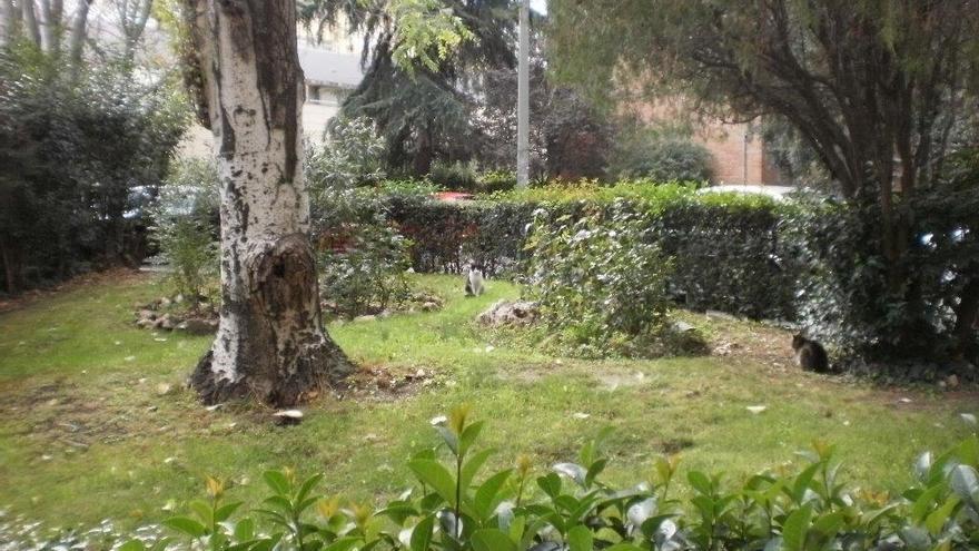 Jardín comunitario con una colonia felina en el distrito de Salamanca (Madrid). Foto: S.P.A.P.