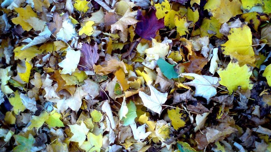Hojas caídas en otoño.