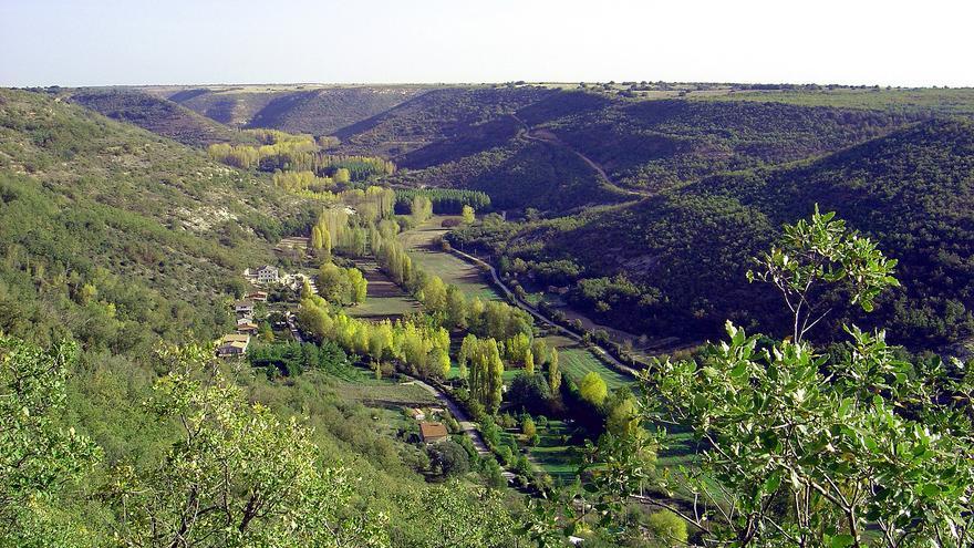 ¿Pueden los bosques ayudar a combatir la pobreza? Así ha enriquecido la sociedad civil la Estrategia 2030 de Castilla-La Mancha