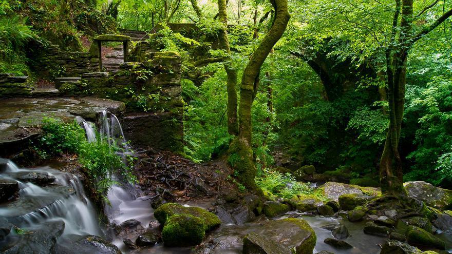 La Fraga de Eume es uno de los mejores de bosque atlántico de ribera de Europa. r2hox