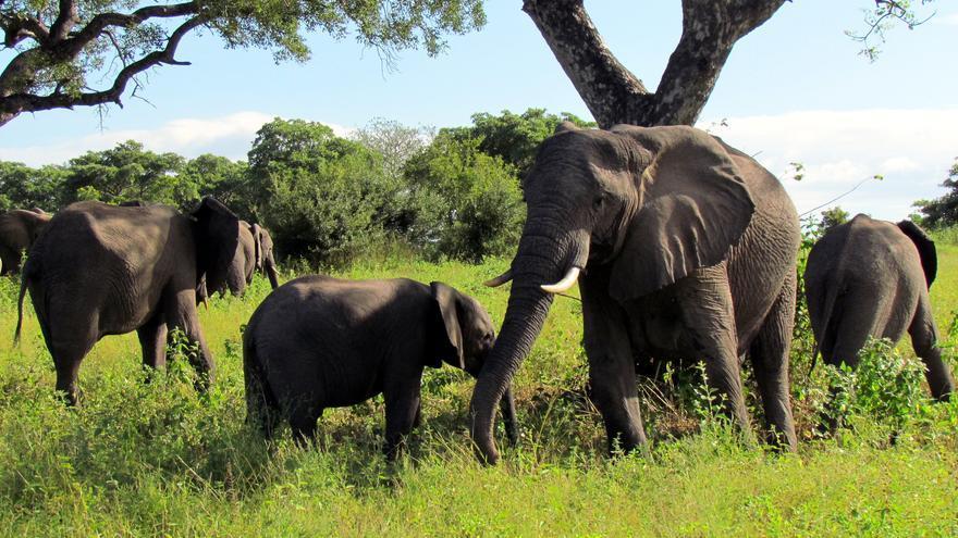 Elefantes en el Parque Nacional Kruger. David Berkowitz
