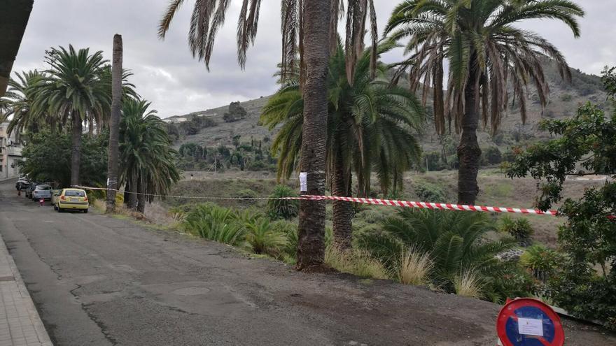 Palmeras afectadas por la plaga Opongona Sacchari en Arucas