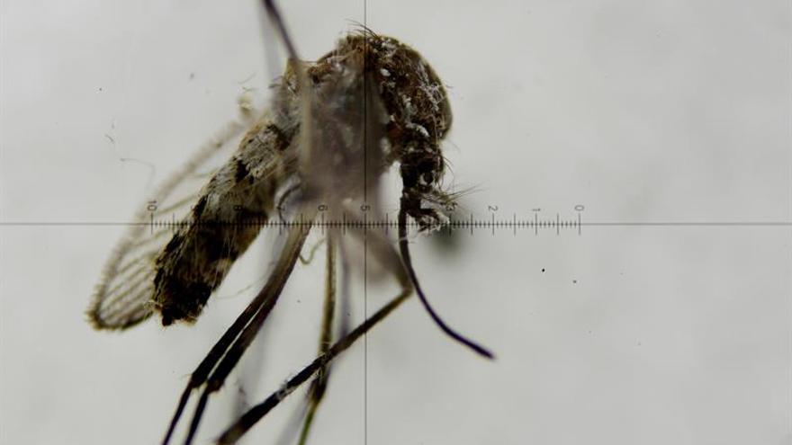 Nuevo caso de zika en EE.UU. levanta alerta de nueva vía de contagio no sexual