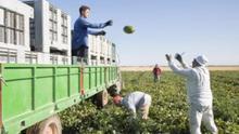 """El Melón de la Mancha diseña """"qué sector queremos"""" para atajar la desunión y la dificultad para llegar al consumidor"""