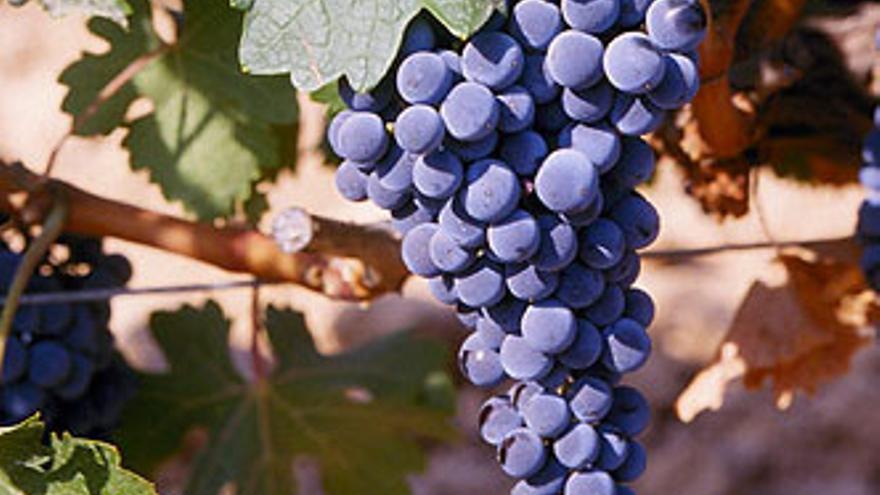 Variedad Cabernet-Sauvignon