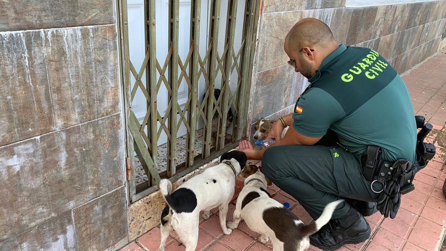 El Cabildo de Gran Canaria da cobijo a 162 animales evacuados por el fuego