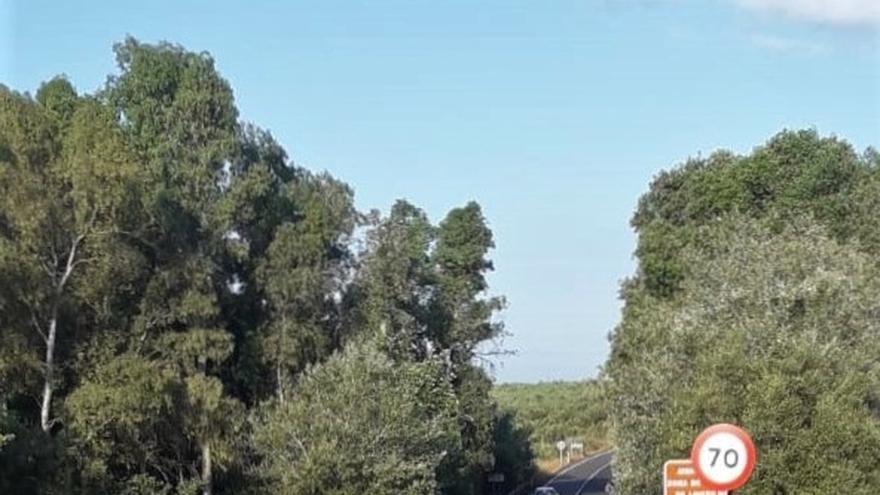 Muere una hembra de lince, el cuarto ejemplar en 15 días en carreteras de la comarca de Doñana