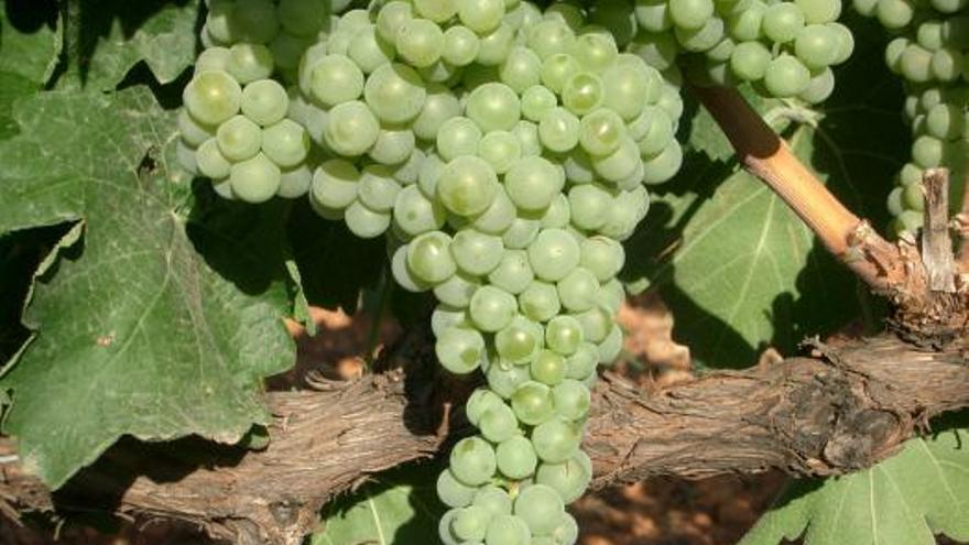 El tinto La Plazuela, de Dosbarrios, el vino de la región mejor puntuado en la Guía Wine up! 2021