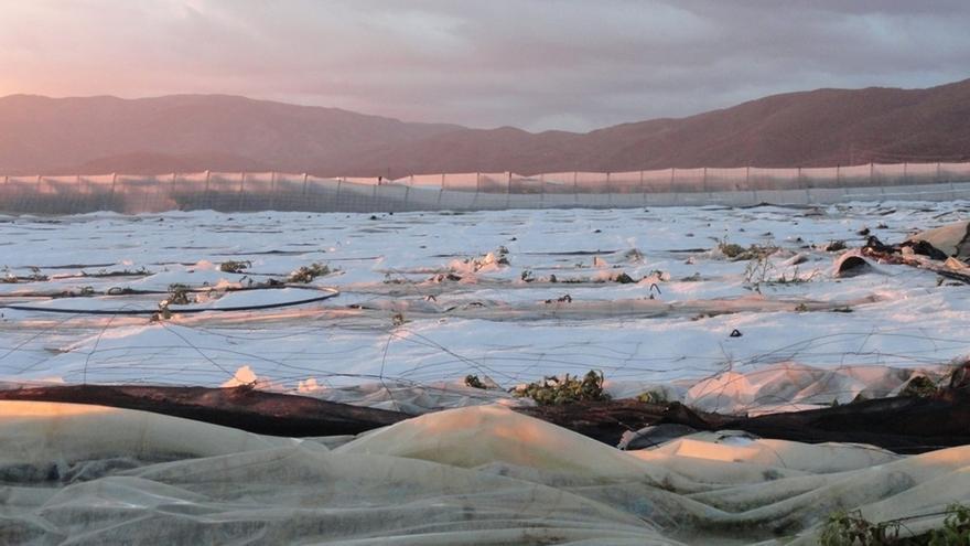 La Junta registra 27 solicitudes de ayuda para paliar daños por granizo por valor de 3,51 millones de euros