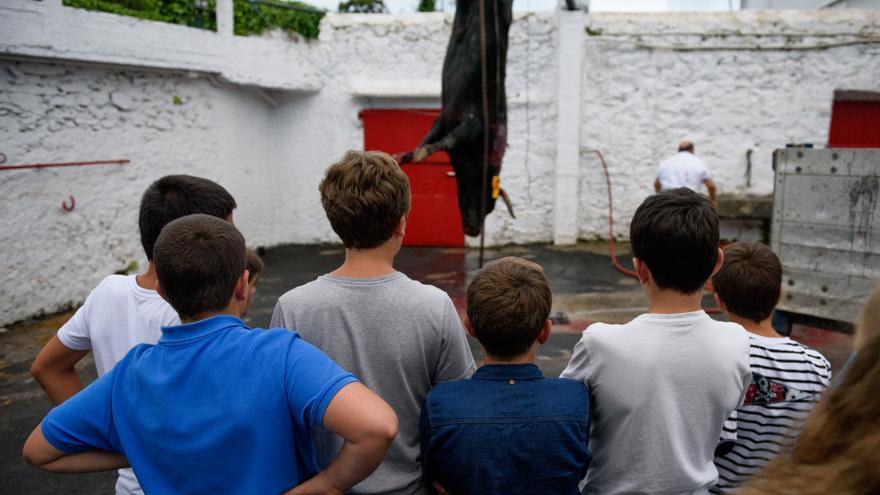 Varios niños contemplan al toro, desangrado y colgando de una de sus patas, en la trastienda de la plaza de Azpeitia. Foto. Askekintza/Tras Los Muros