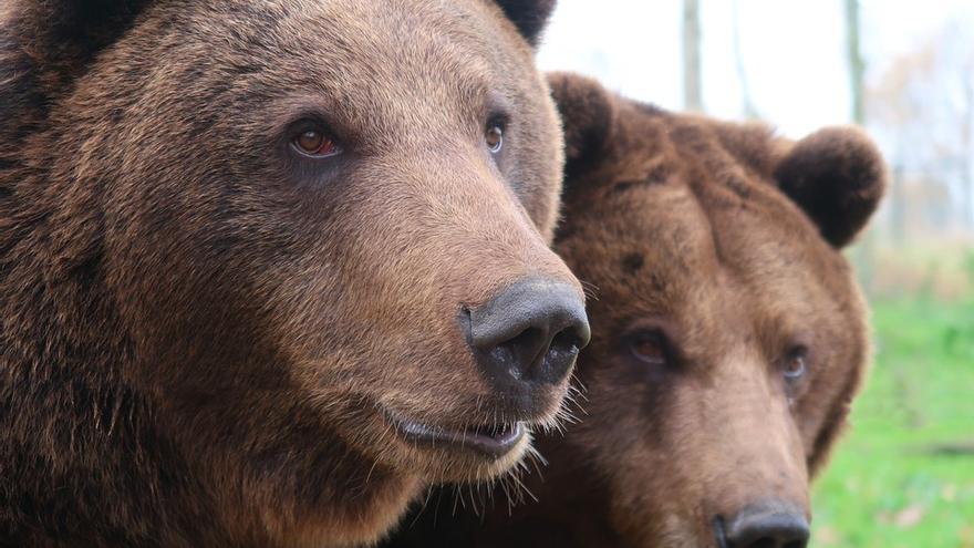 csic osos