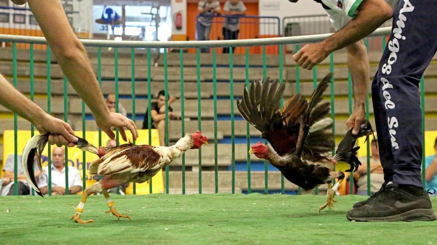 Riña de gallos celebrada en el López Socas