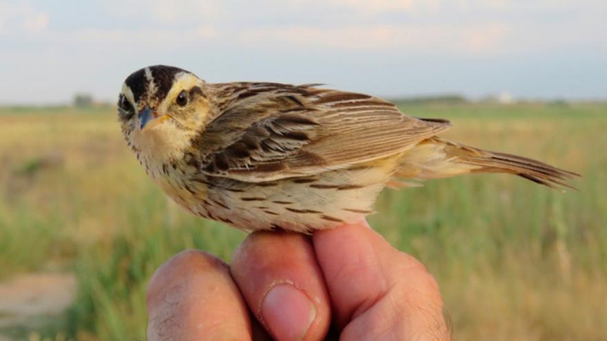 FOTO: Fundación Global Nature