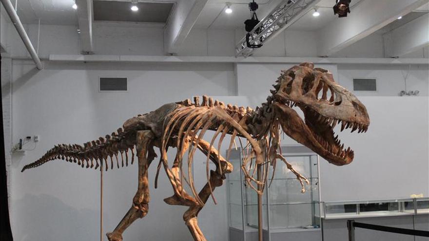 EE.UU. devuelve a Mongolia el esqueleto de un tiranosaurio importado ilegalmente