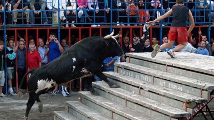 La 'actuación' en 2011 en Canals del toro 'Ratón' causó polémica en la localidad