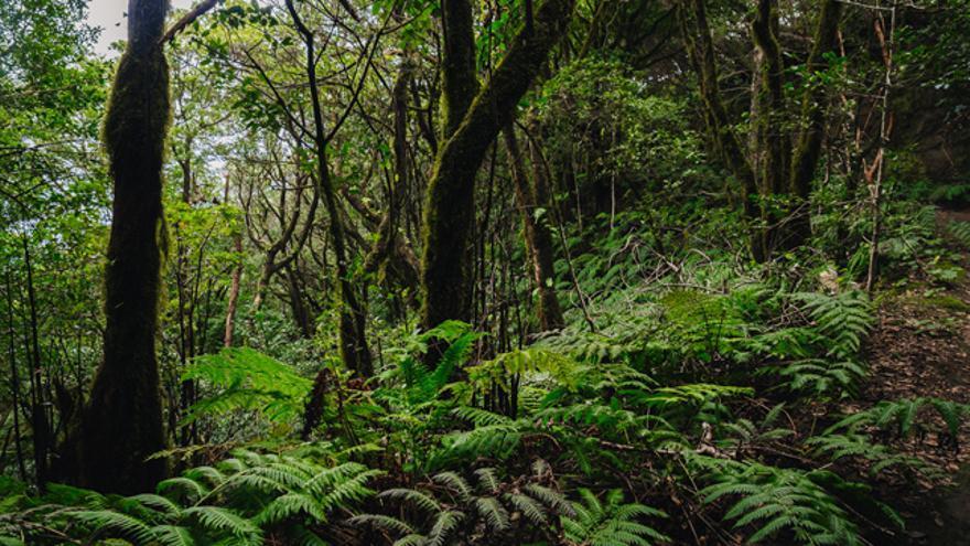 Naturaleza de Tenerife.