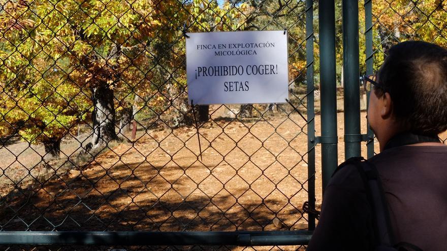 Setas en Aracena