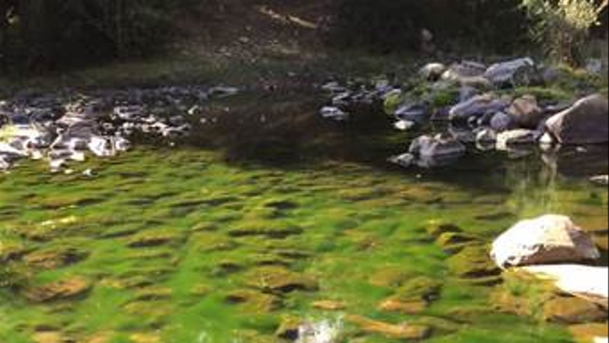 Lecho fluvial del río Sorbe cerca de La Huerce (2019) Foto: AEMS-Ríos con Vida