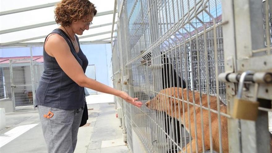 Una mujer alimenta a un perro en el centro canino