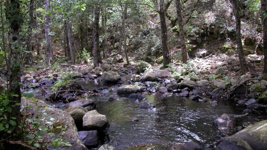 Masa forestal en Andalucía