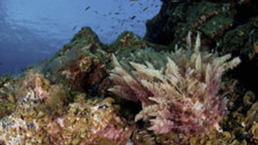 FotografíŒa tomada en septiembre de 2009 y facilitada por oceana de la reserva marina mar de las calmas. CARLOS SUAREZ/EFE