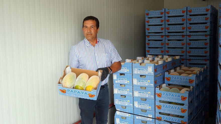 Justo M. Ramirez, agricultor de papayo en Gran Canaria