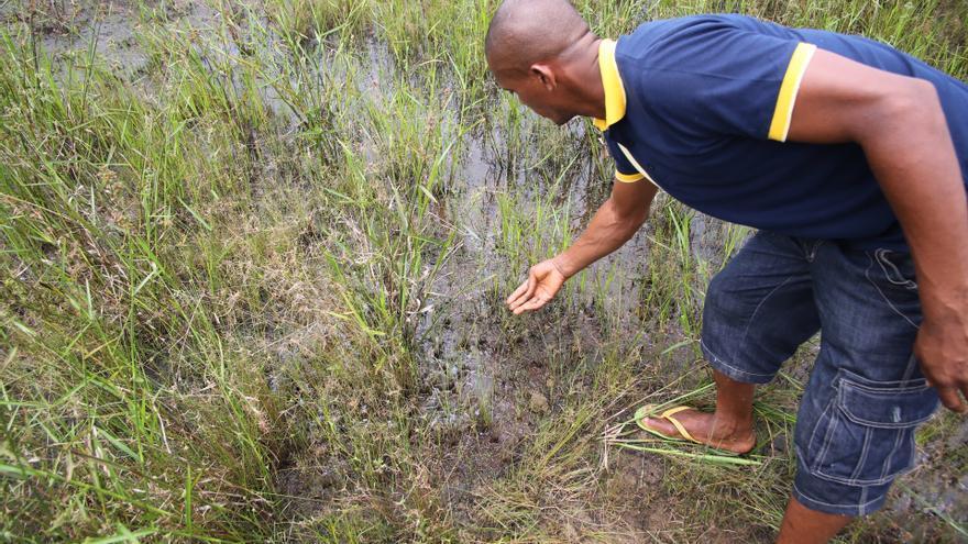 Contamination en el territorio de Bobbanabe, en el delta del río Níger, 45 años después de una gran fuga de crudo. Las petroleras están obligadas por ley a descontaminar los terrenos en Nigeria, pero no siempre ocurre de manera eficiente.   Fotografía: Amnistía Internacional.