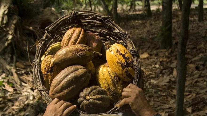 Trabajador de Maquita Cuschuchunchic, una organización de comercio justo de Ecuador que produce cacao. Foto: IDEAS