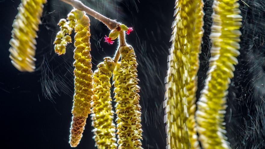 C:\fakepath\© Valter Binotto_Wildlife Photographer of the Year- Plants winner.jpg