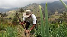 Una huerta comunitaria trae transformación y subsistencia a un pueblo colombiano