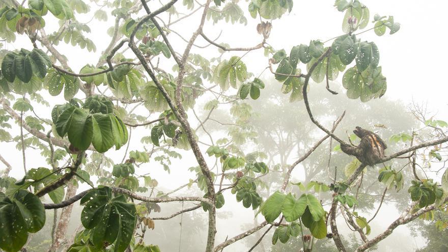 'Colgado del canopy'. Finalista de la categoría Jóvenes fotógrafos de 11 a 14 años