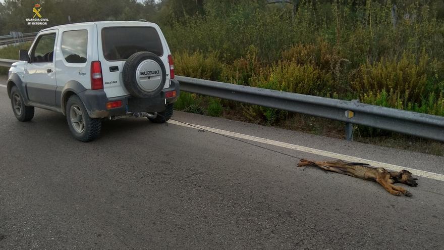 Investigado por la muerte de un cachorro de pastor alemán al arrastrarlo con su coche varios kilómetros