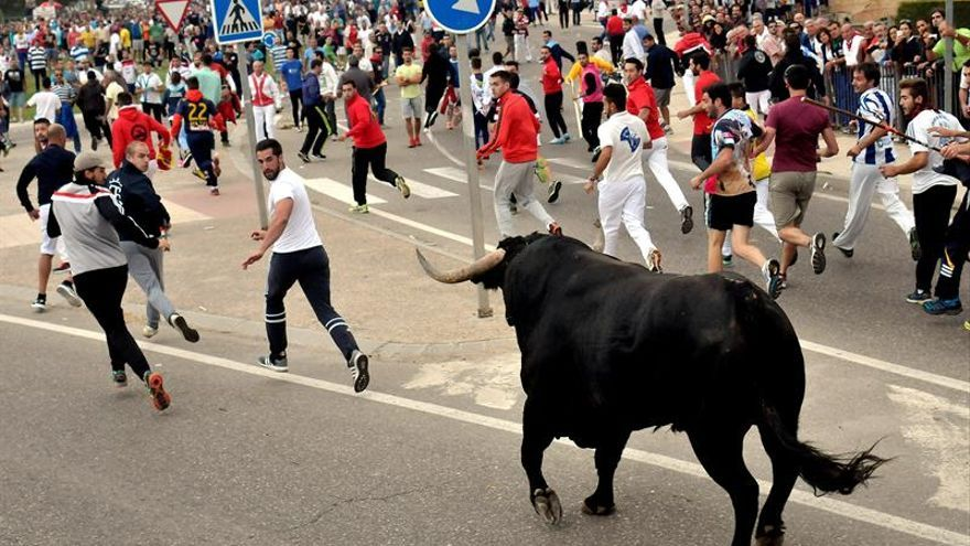 """Tordesillas recupera la denominación de """"Toro de la Vega"""" para su festejo"""