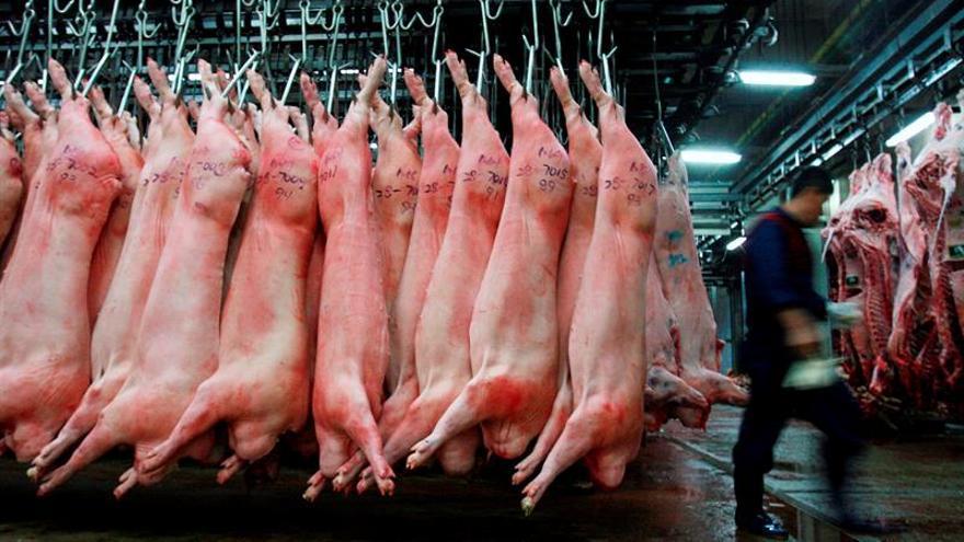 Continúa el contagio de fiebre porcina en jabalíes salvajes de Corea del Sur